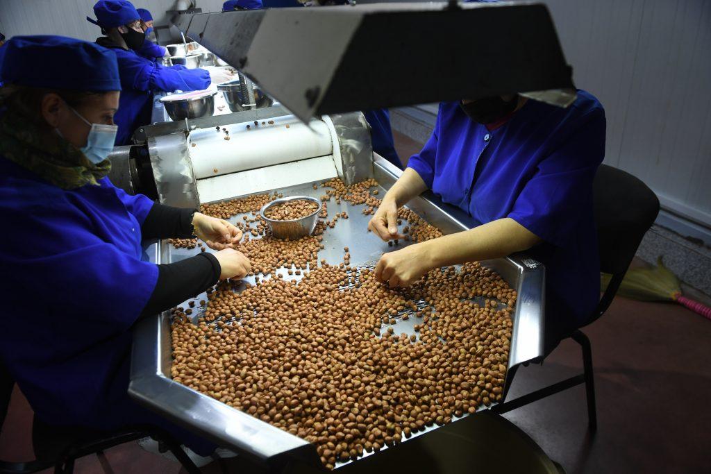 "Nuts Enterprise ""GTG Plus"" - თხილის საწარმო"